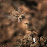 One Flew Away by InayatShah