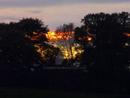 sunset through the trees by Breeny38