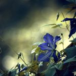 blue.stained.canopy by sarah-marley