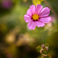 All above the Bokeh. by OliviaMichalski
