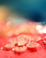 in the middle of a flower. .. by light-from-Emirates