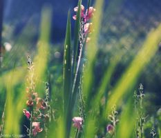 Vague recollection of summer by bezag
