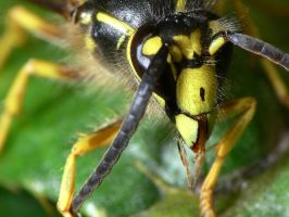 Another Hornet Macro 2 by Twitch1977