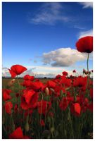 Red Poppies by VaaalEEE