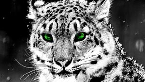 Snow Leopard by Lulztroll87