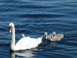 we are family by elliemoo