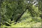 A green and peaceful place by Arte-de-Junqueiro