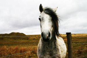 Horse by 11001001
