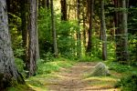 Forest path stock by annamnt
