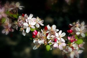 Spring In The Air by Vividlight