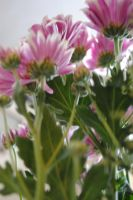 Floral Blur by MaePhotography2010