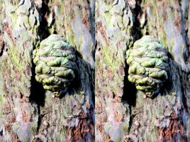 Giant Redwood Cone And Bark Stereo Watercolour by aegiandyad