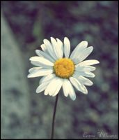 Pushing Up Daisies by Whispyr