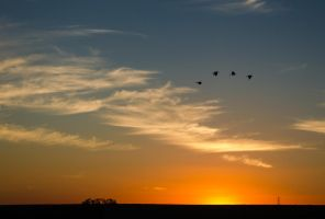Birds at Sunset by rabellogp