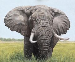 Bull Elephant. Oil on panel. by painterman33