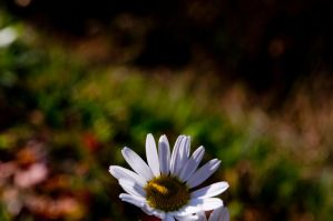 Flower Power by sarasphotography