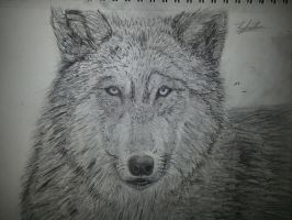 Wolf by VanishedReality