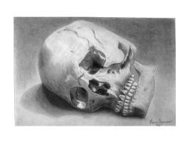 Skull study drawing II by KarinClaessonArt