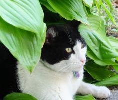 Covered with Hosta Leaves by Kitteh-Pawz