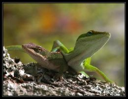 Green Anoles 40D0004418 by Cristian-M