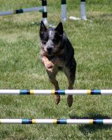 Dolly Jumping III by akeithphotography