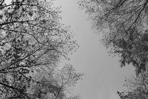 overhead series sky and trees 2 by GreenSlOw