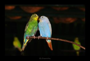 bird's love by MarcoHeisler