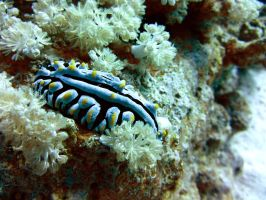SCUBA Diving - Hurghada - Aug 2012 - 1 by OccipitalClimax