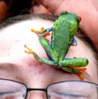 Frog meets forehead by crudinski