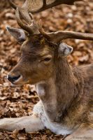 Sika by mortenthoms