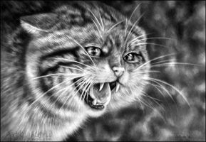 Scottish Wildcat by ArtbyKerli