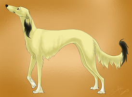 saluki - for Dragonsmist by swift-whippet