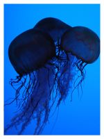 Jellyfish 06 by Igloo61