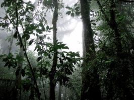 Cloud Forest by Nevma