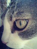 Cat eye by CelesteMulvai