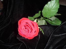 ..Red Rose Two.. by Bloody-Kisses-STOCK