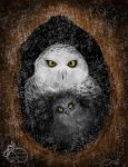Snow Owls ( Bubo scandiacus ) by NadilynBeato