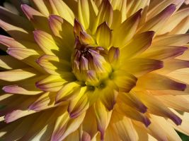 flower 63 by EphemeralMind