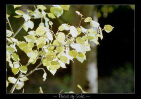 Fall Colors . Pieces of Gold by idlewild202
