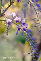 Japanese Wisteria by CecilyAndreuArtwork