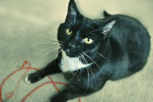 I Haz My String, Come On Lets Play! by suezn