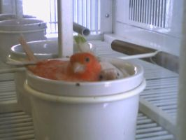 Birds in a Cup by p-o-c-k-e-t
