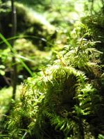 Forest moss by Ludo38