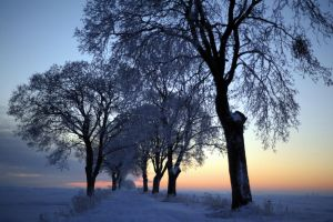 winter dawn by Wilithin