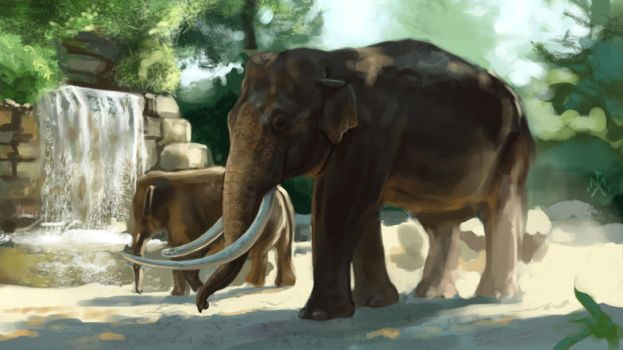 SP - Asian Elephant study by SunMoonDragoness