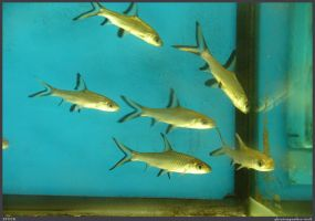 Fish Stock 0054 by phantompanther-stock