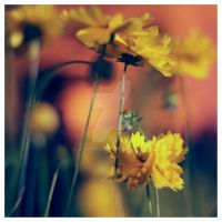 Yellow by avrin1