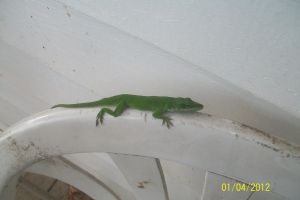 First Lizard of The year by PuffyDearlySmith