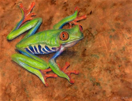 Tree Frog by AmandaSpaid
