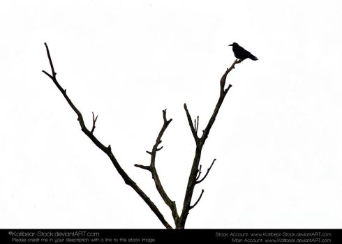 Animals 032 - Bird Silouette by Katibear-Stock